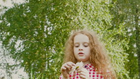 Curly girl guesses on a white daisy. stock footage