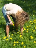 Curly girl picking flowers Stock Image