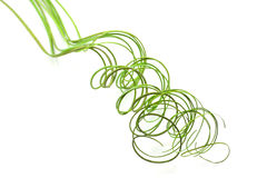 Curly green grass Royalty Free Stock Image