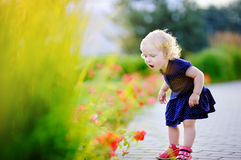 Curly hair toddler girl smelling red flowers Stock Images
