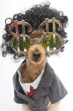 Curly Haired Business Dog Stock Photography