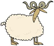 Curly horned sheep Stock Image