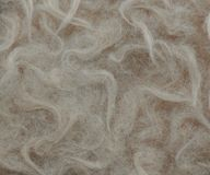 Curly horse hair. Close up view. Brown foal fur stock photography