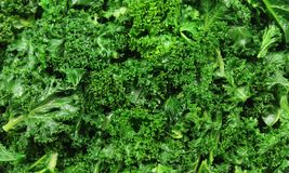 Curly Kale Royalty Free Stock Photography