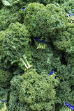 Curly kale on display at the market Stock Photography