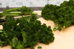 Curly kale home grown Royalty Free Stock Image