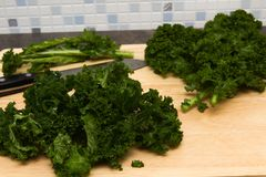 Curly kale home grown Royalty Free Stock Photos
