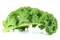 Curly kale. Isolated on white background Stock Photos