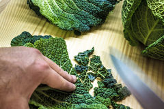curly kale in the kitchen Royalty Free Stock Photo
