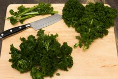 Curly kale. Super food curly kale freshly cut being prepared for cooking royalty free stock photography