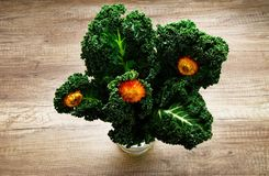 Curly kale on wooden background. Curly kale. Green vegetable leaves with dry blossom on wooden background Royalty Free Stock Photo