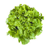 Curly Leaf lettuce Isolated Royalty Free Stock Photography