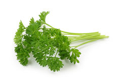 Curly leaf parsley stock photography