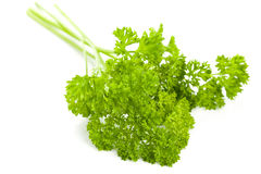 Curly leaf parsley Royalty Free Stock Images