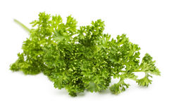 Curly Leaf Parsley Stock Photos