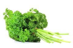 Curly leaf parsley Stock Images