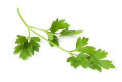 Curly-Leaf Parsley sprig Stock Images