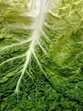 Curly leaves cabbage Royalty Free Stock Photos