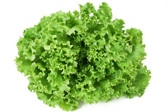 Curly lettuce Stock Photography