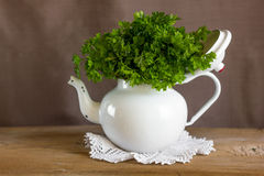Curly organic parsley Stock Photos