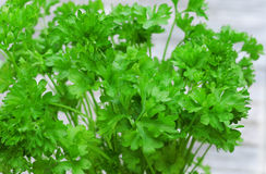 Curly parsley Royalty Free Stock Photography