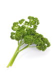 Curly parsley Royalty Free Stock Photos