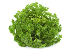 Curly parsley bunch Royalty Free Stock Photos