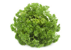 Curly parsley bunch Royalty Free Stock Images