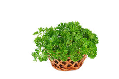 Curly parsley. Bunch of fresh green curly parsley in a basket, isolated on white background Royalty Free Stock Photo