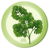 Curly Parsley Herb Icon. Fresh, flavorful leaves widely used in Middle Eastern, European cuisines and American cooking. Classic ingredient of French herb Stock Photos