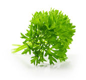 Curly parsley Stock Image