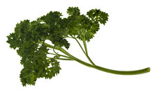 Curly parsley leaves Stock Photography