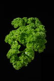 Curly parsley sprig on black Royalty Free Stock Images