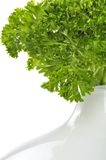 Curly Parsley in Vase Stock Image