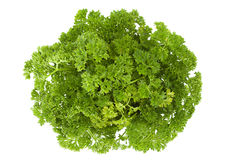Curly parsley on white Stock Images