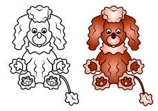 Curly Puppy of a Poodle dog Royalty Free Stock Images