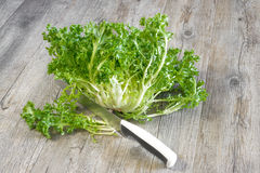 Curly salad Stock Image