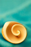 Curly sea shell. Curly sea shell isolated on green Stock Photo