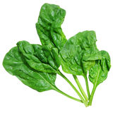 Curly spinach Royalty Free Stock Images