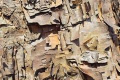 curly szczekać drzewo Obraz Royalty Free