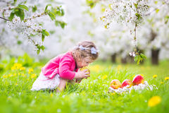 Curly toddler girl eating apple in blooming apple garden Stock Image