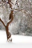 Curly tree in the snow Royalty Free Stock Photography