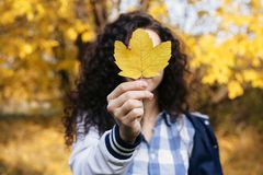 Curly woman holding maple leaf. Portrait of happy curly woman holding autumn maple leaf in hand and posing in autumn park royalty free stock images