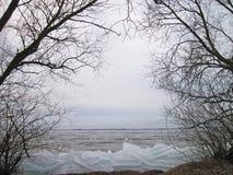 Curonian唾液、冰和树在冬天,立陶宛 库存图片