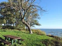 Curonian盐水湖岸,立陶宛 免版税库存照片