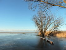 Curonian lagoon shore , winter. Lithuanian landscape Stock Image
