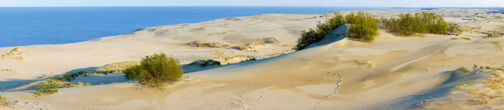 Curonian Spit. Dunes on the Curonian Spit Stock Photography