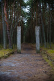 Curonian Spit. Entrance to the Dancing forest. Royalty Free Stock Images