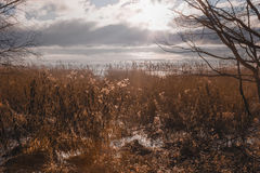 The Curonian Spit flora Royalty Free Stock Photography