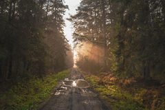The Curonian Spit flora Stock Photography